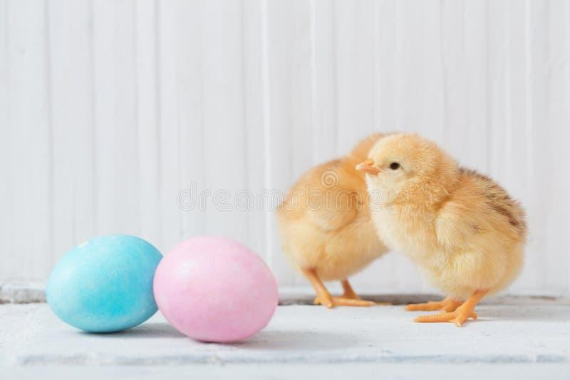 Huevo del pollo y de Pascua en fondo de madera fotografía de archivo