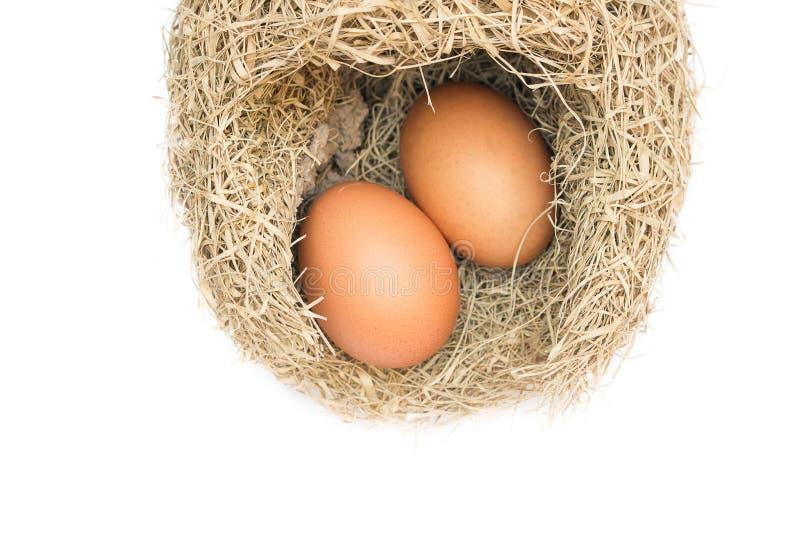 Huevo en jerarquías de la alondra imagenes de archivo