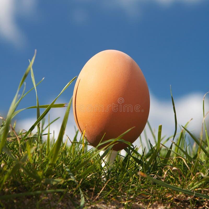 Huevo hermoso foto de archivo