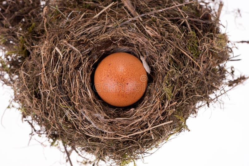 Huevo marrón grande en la pequeña jerarquía del pájaro fotos de archivo