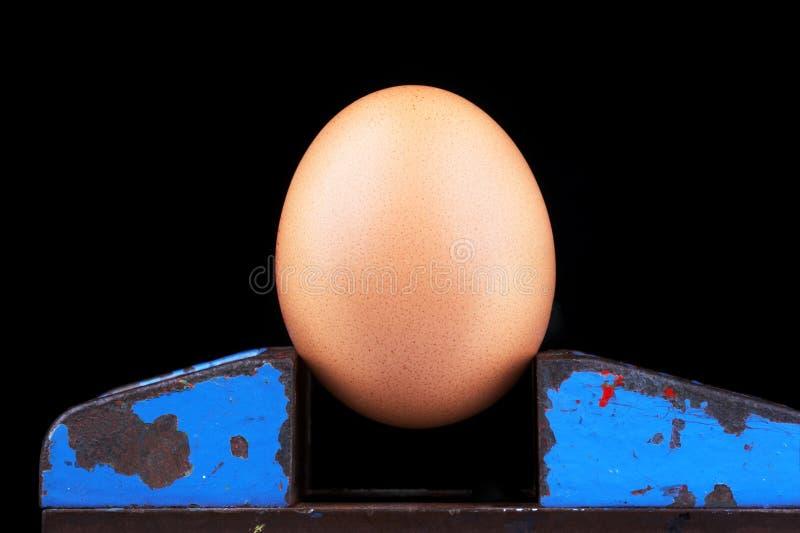 Huevo pardusco en un vicio foto de archivo libre de regalías
