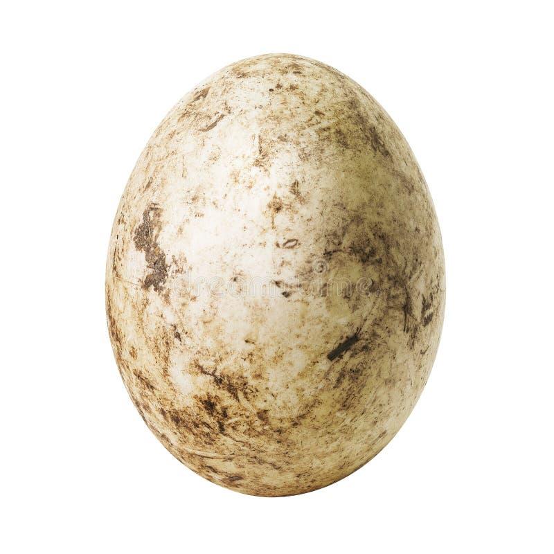 Huevo sucio blanco imagen de archivo