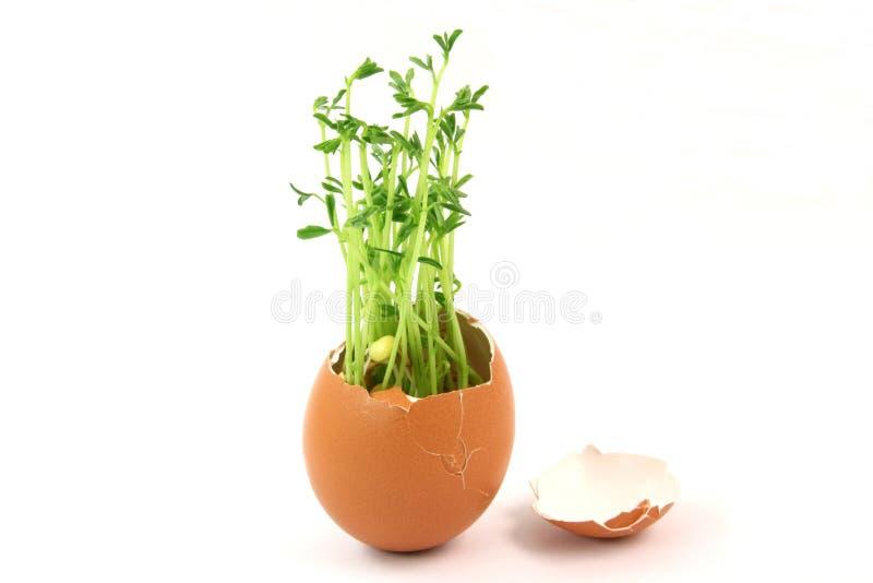Huevo verde foto de archivo libre de regalías