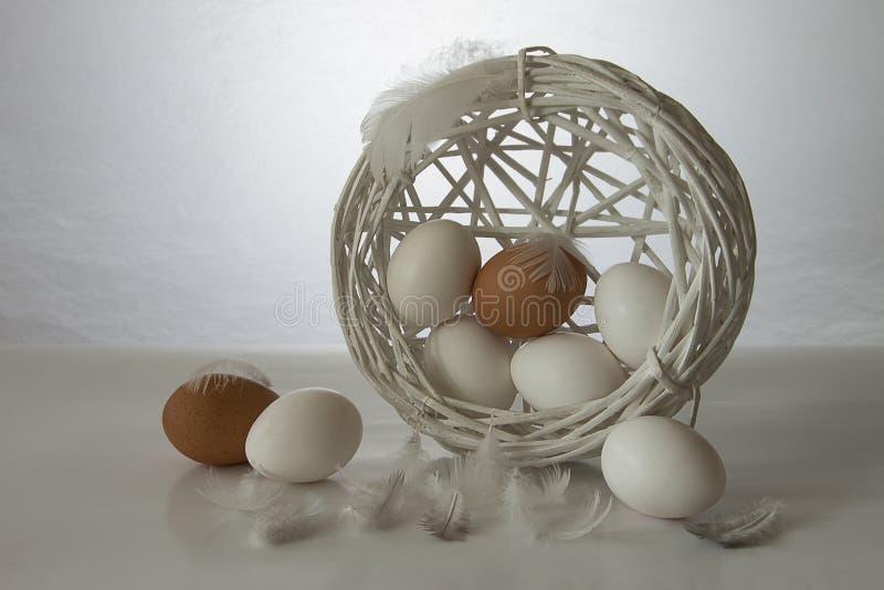 Huevos blancos con las plumas fotografía de archivo