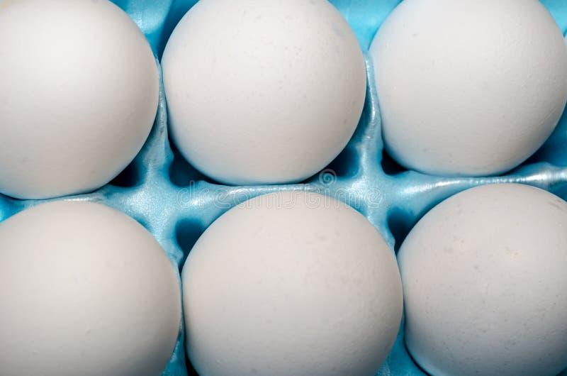 Huevos blancos del pollo en cajón azul del huevo foto de archivo