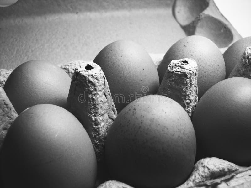 Huevos blancos y negros imagen de archivo