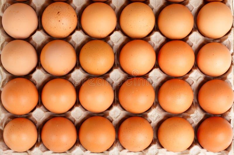 Huevos de Brown en cedazo foto de archivo