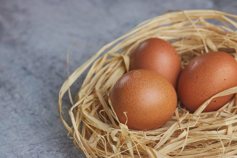 Huevos de Brown en jerarquía del heno en cemento ligero Huevos frescos de la granja vista horizontal de los huevos crudos del pol imagenes de archivo