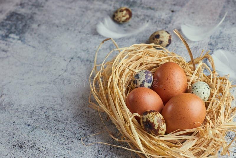 Huevos de Brown en jerarquía del heno en cemento ligero Huevos frescos de la granja vista horizontal de los huevos crudos del pol fotografía de archivo libre de regalías