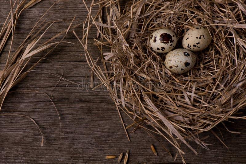 Huevos de codornices en jerarquía en fondo de madera de la paja rústica fotografía de archivo libre de regalías