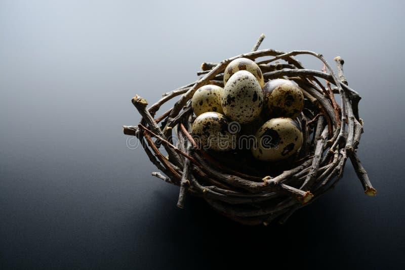 Huevos de codornices en la jerarquía de ramitas en un fondo negro imágenes de archivo libres de regalías
