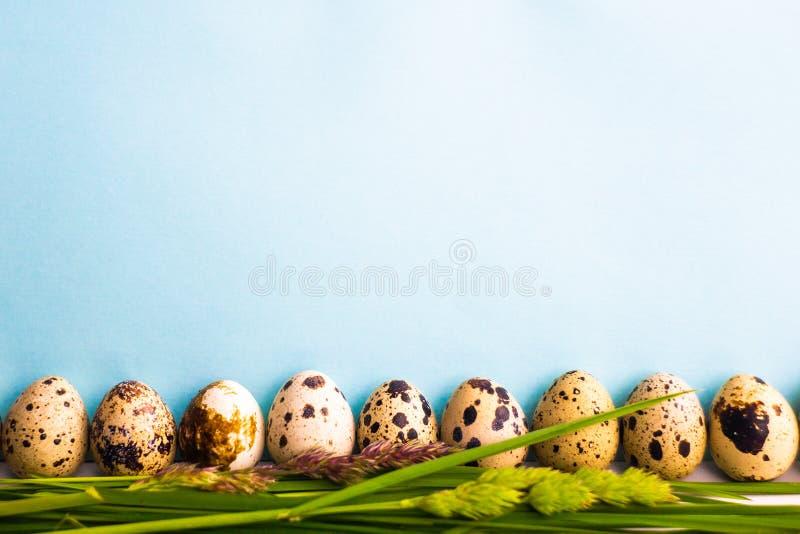 Huevos de codornices en un soporte azul del fondo en la hierba cerca fotografía de archivo