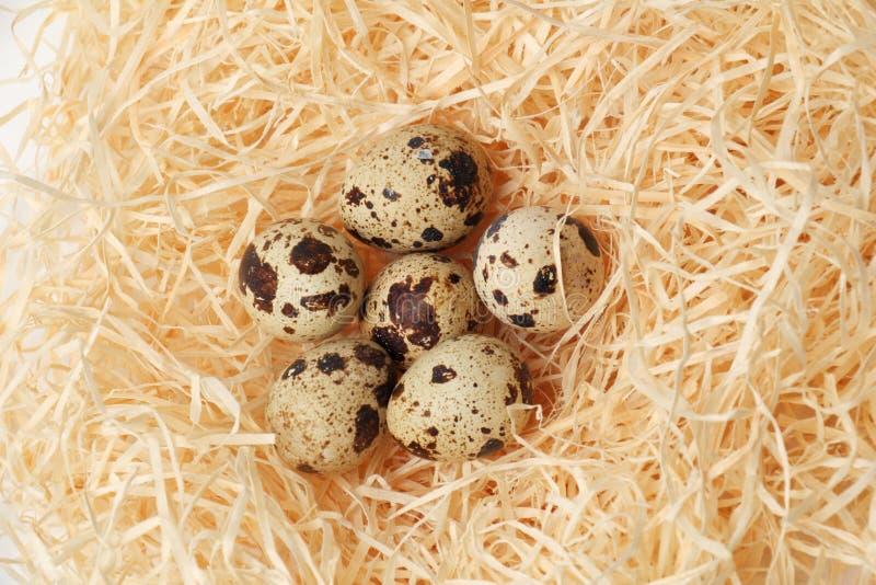 Huevos de codornices en una jerarquía del heno fotos de archivo libres de regalías