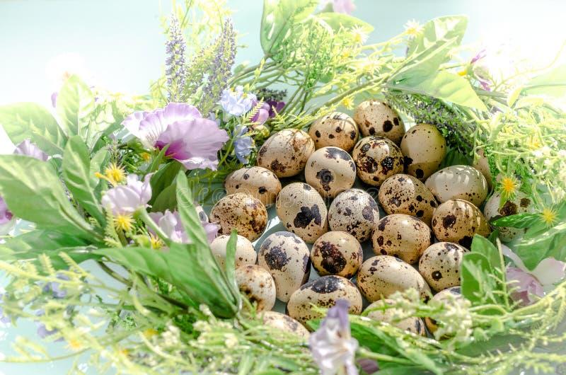 Huevos de codornices naturales en jerarquía floral en luz soleada en fondo azul Pascua feliz, primavera, concepto sano de la vid imagen de archivo