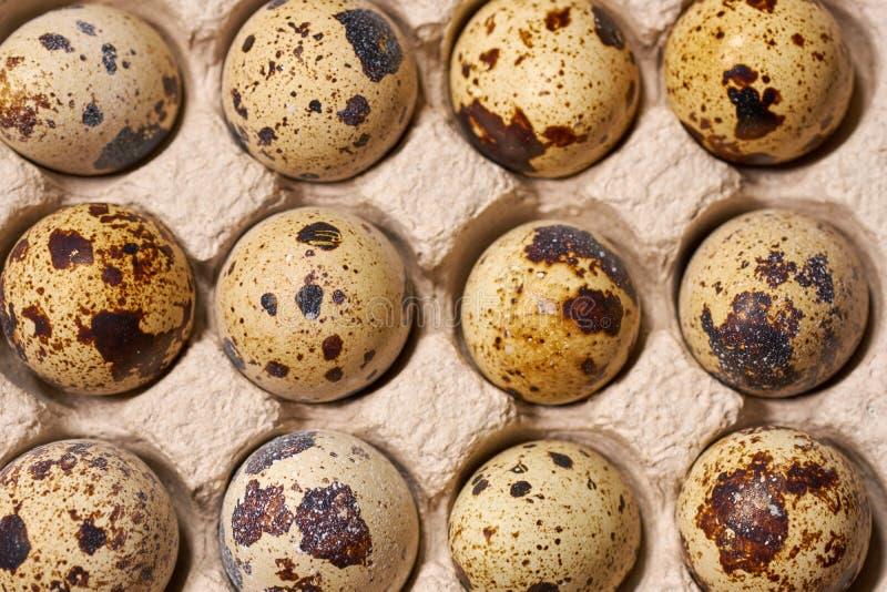 Huevos de codornices s en enrejado en fondo de madera marrón Foco selectivo imagen de archivo libre de regalías
