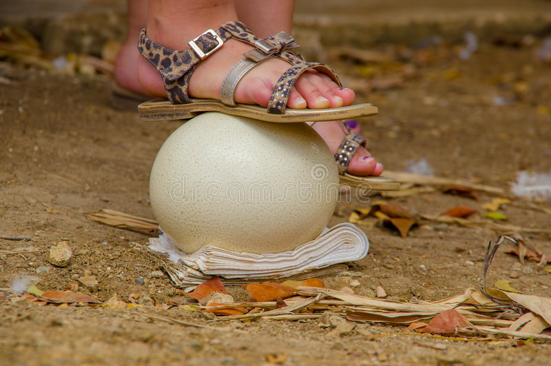 Huevos de la avestruz para que turistas se coloquen fotografía de archivo