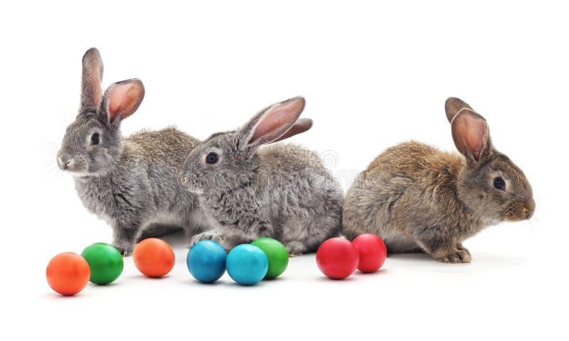 Huevos de los conejos y de Pascua fotos de archivo libres de regalías