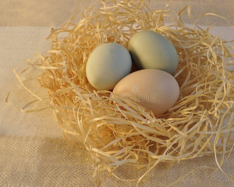 Huevos de Pascua coloreados en colores pastel en una jerarquía imagen de archivo libre de regalías