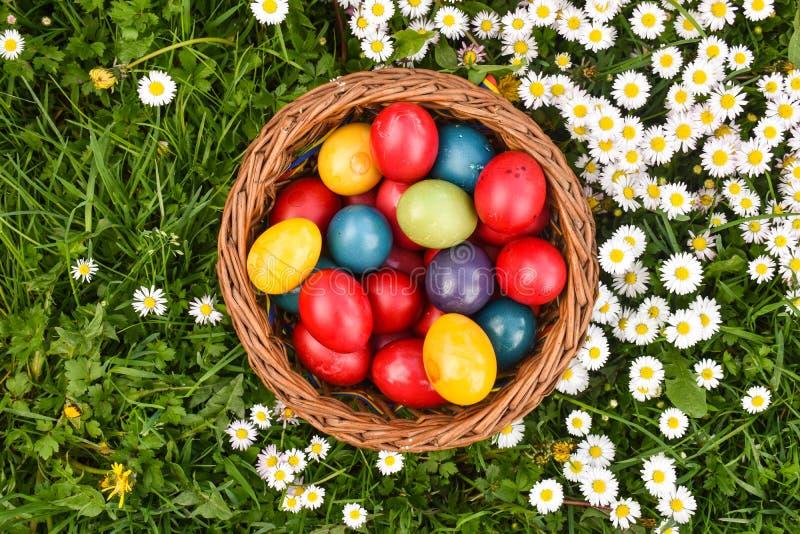 Huevos de Pascua coloridos en la hierba verde con las flores blancas de la primavera imagen de archivo