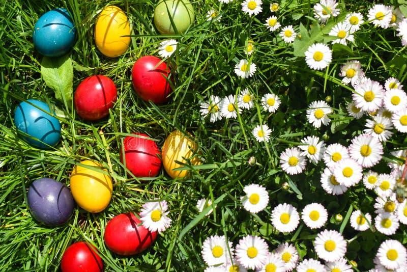 Huevos de Pascua coloridos en la hierba verde con las flores blancas de la primavera imágenes de archivo libres de regalías