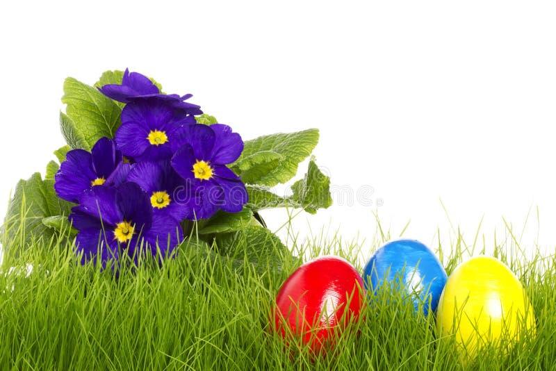 Huevos de Pascua con un primula púrpura imagen de archivo