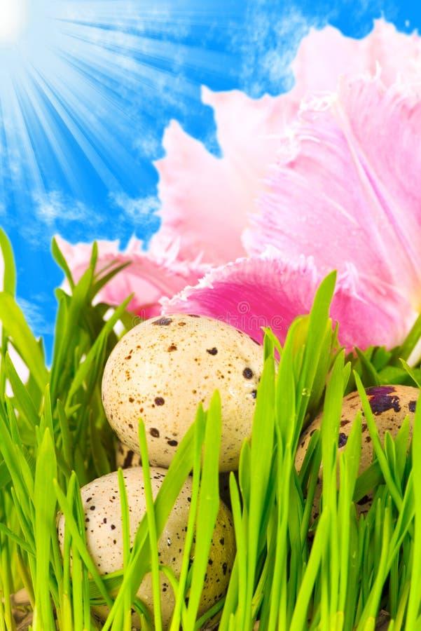 Huevos de Pascua en flor fotografía de archivo libre de regalías