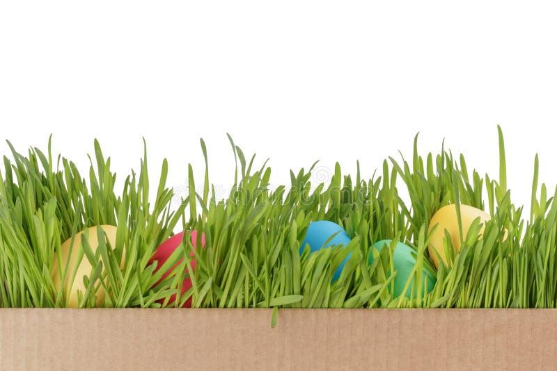 Huevos de Pascua en fondo fresco del blanco de la hierba verde imágenes de archivo libres de regalías