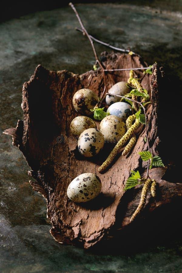 Huevos de Pascua de las codornices en jerarqu?a foto de archivo libre de regalías