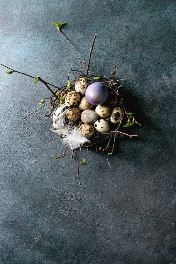 Huevos de Pascua de las codornices en jerarqu?a foto de archivo
