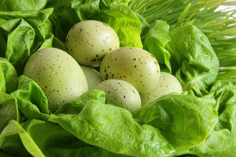 Huevos de Pascua verdes en hojas de la lechuga imagen de archivo