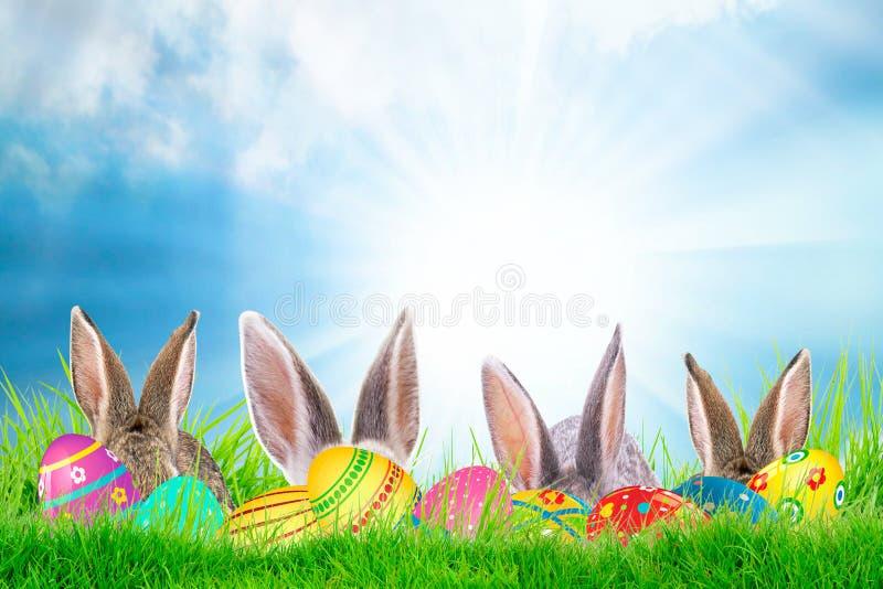 Huevos de Pascua y conejito lindo en hierba verde Decoración festiva Pascua feliz, fondo de la primavera del día soleado foto de archivo libre de regalías