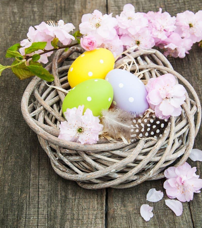 Huevos de Pascua y flor de Sakura foto de archivo libre de regalías