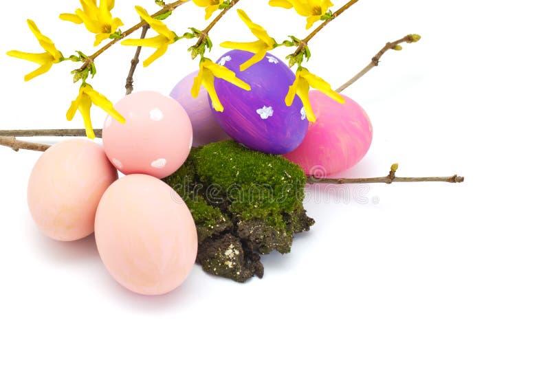 Huevos de Pascua y flores de la forsythia aisladas en blanco foto de archivo