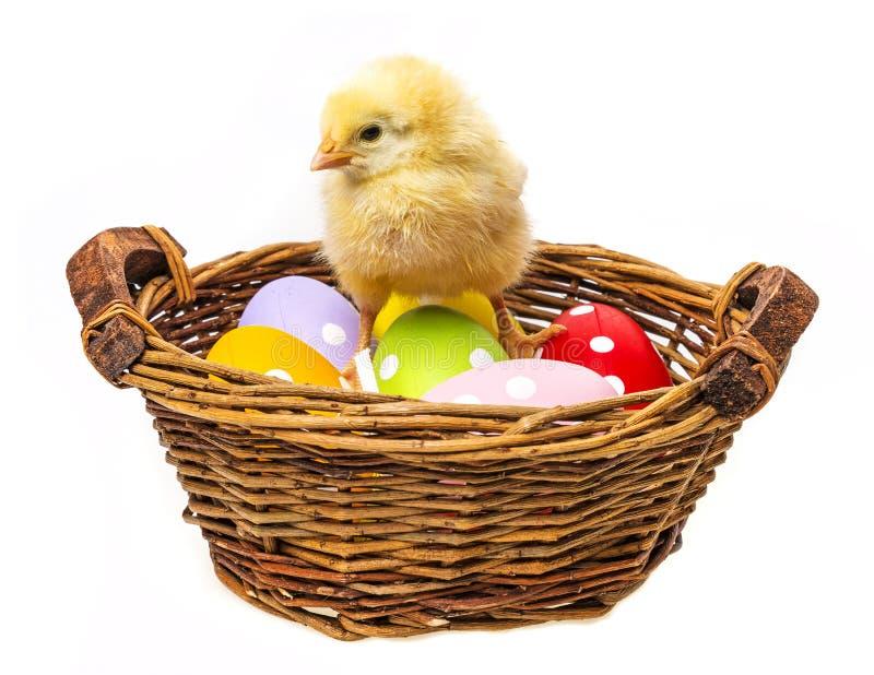 Huevos de Pascua y un pollo fotografía de archivo