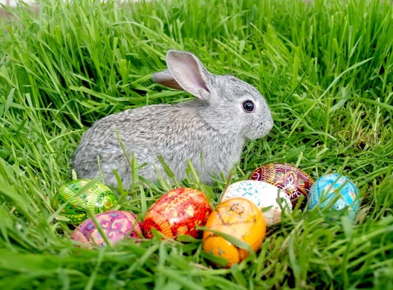 Huevos del conejito de pascua fotografía de archivo