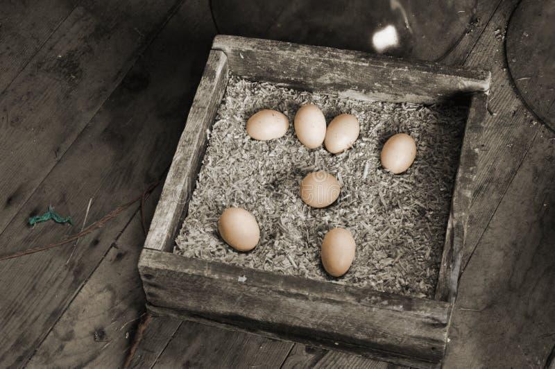 Huevos del pollo foto de archivo