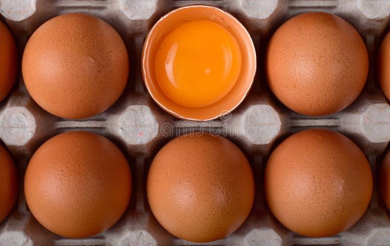 Huevos del pollo de Brown en las jerarquías del cartón con las cáscaras tajadas y la yema de huevo anaranjada imagen de archivo libre de regalías