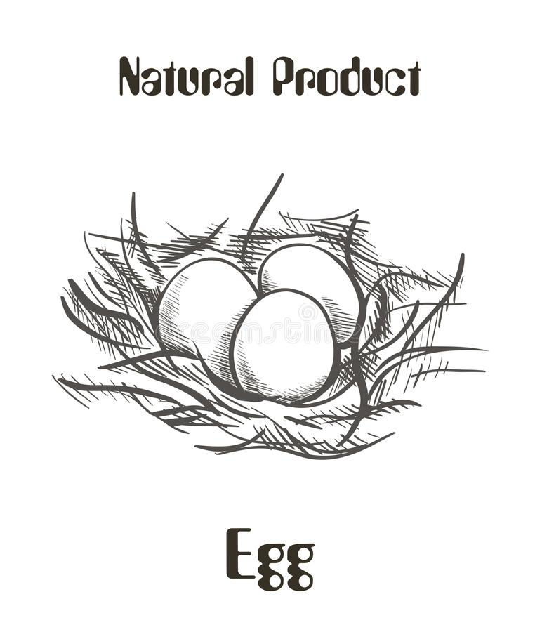 Huevos del pollo en la jerarquía ilustración del vector