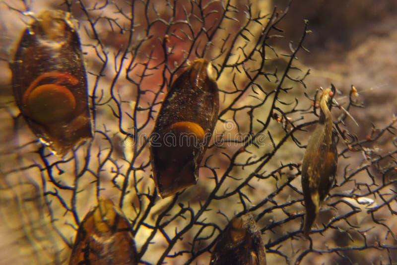 Huevos del tiburón imágenes de archivo libres de regalías