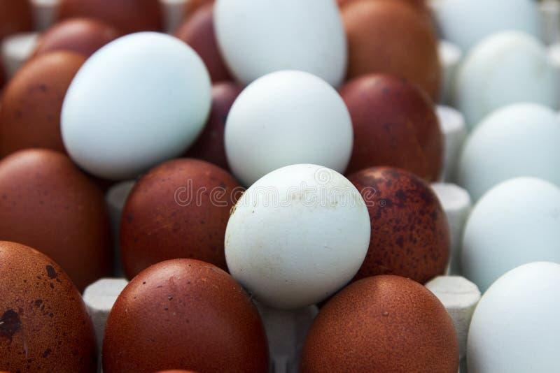 Huevos ecológicos naturales del color marrón y azul imagenes de archivo