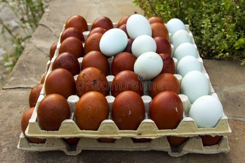 Huevos ecológicos naturales del color marrón y azul fotografía de archivo