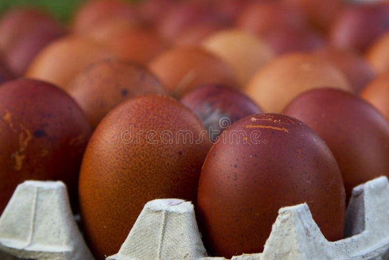 Huevos ecológicos naturales del color marrón y azul imágenes de archivo libres de regalías