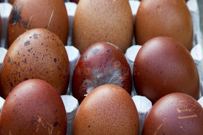 Huevos ecológicos naturales del color marrón y azul fotos de archivo