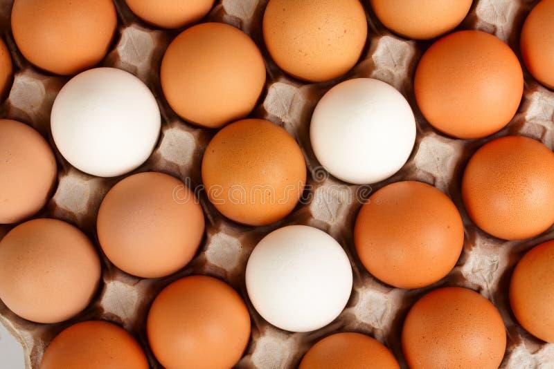 Huevos en cedazo fotos de archivo