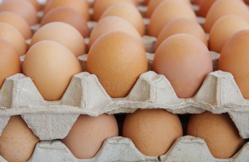 Huevos en el embalaje imágenes de archivo libres de regalías