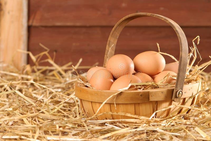 Huevos en el granero foto de archivo libre de regalías