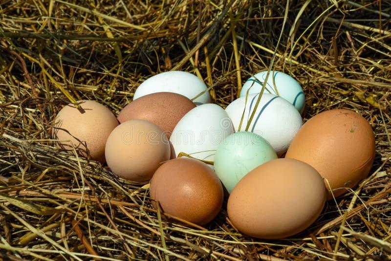 Huevos en el heno imágenes de archivo libres de regalías
