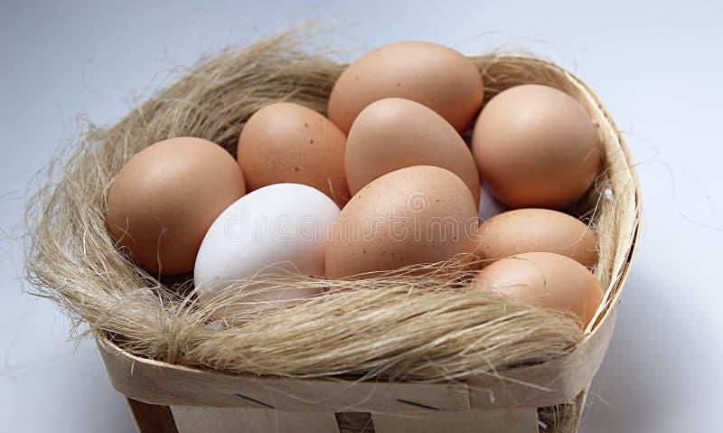 Huevos en la bandeja fotos de archivo
