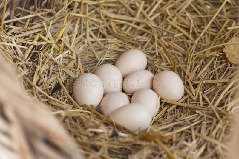 Huevos en la jerarquía del heno en la cesta natural de pollos fotos de archivo
