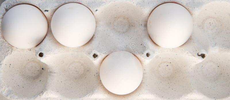 Huevos en una caja especial Cuatro huevos blancos foto de archivo libre de regalías